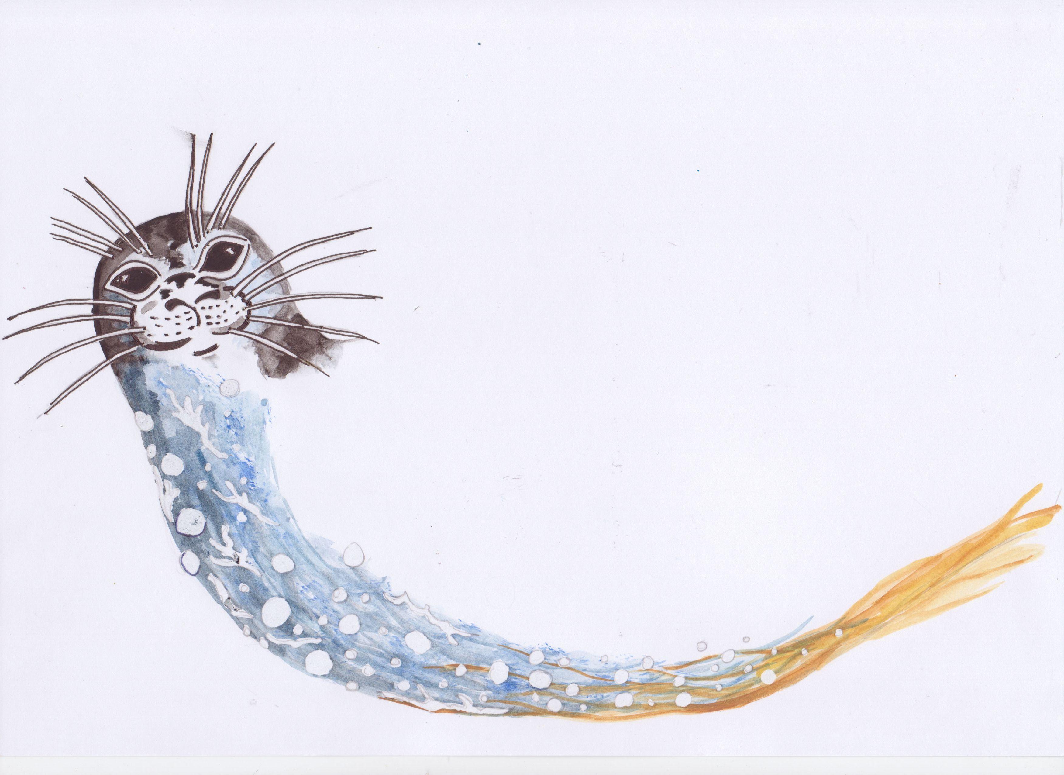 phoque veau marin aquarelle didier lavadoux